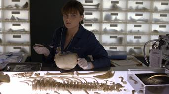 Is Bones: Season 6: The Doctor in the Photo on Netflix