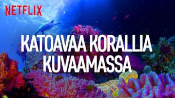 Chasing Coral: katoavaa korallia kuvaamassa (2017)