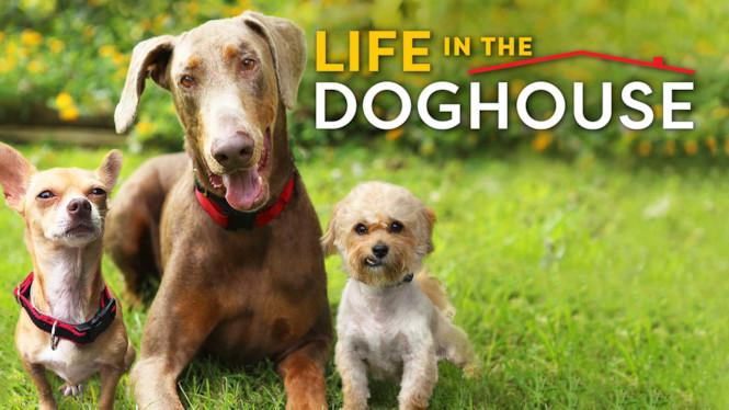 Koirien ystävät Danny ja Ron